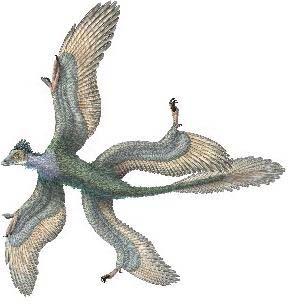 microraptor21